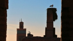Stork birds and nests on the top of old loam constructions in historic El Badi Palace in the Medina of Marrakesh, Morocco, with Muslim minaret tower in the afternoon sun framed by loam walls.