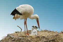 stork-family on blue background