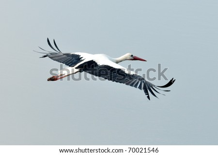 stork flying against the sky
