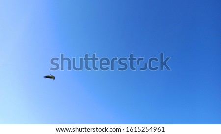Stork flying in the blue sky with large nest on top of a pillar of electric cables