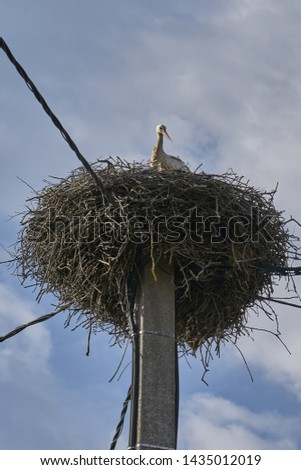 Stork in its large nest
