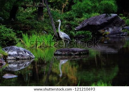 Stork in Zen Garden - stock photo