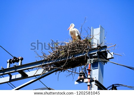 stork nest on a railway construction #1202581045