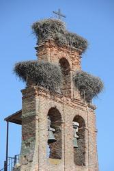 Stork nests on the Santa Engracia church steeple, Valverde de la Virgen, Spain.