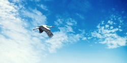 Stork on a background of blue sky. Bird in flight. Background texture