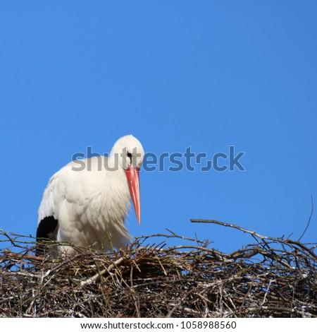 stork on a nest #1058988560