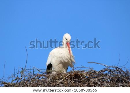 stork on a nest #1058988566