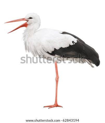 Stork on his long legs and an open beak. Symbol of pregnancy.