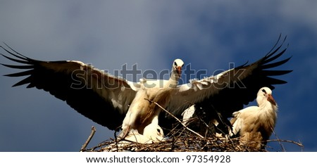 Stork on the nest with wings spread wide open