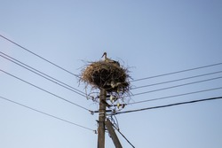 Stork resting after a working day