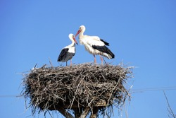 stork returning to their nests in the spring months, the stork's nest, the two storks,