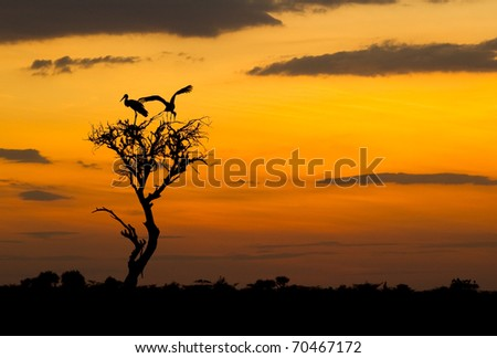 Stork with wing spread against african sunset