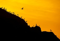 storks are resting in the evening in migration fatigue