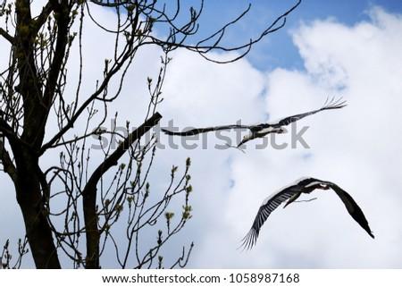 storks flying in a blue sky #1058987168