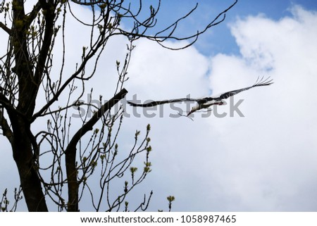 storks flying to build his nest #1058987465