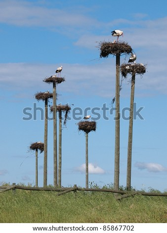 Storks in a protected area in Caceres, Spain