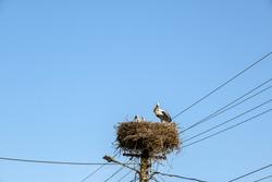 storks in the nest on light poles