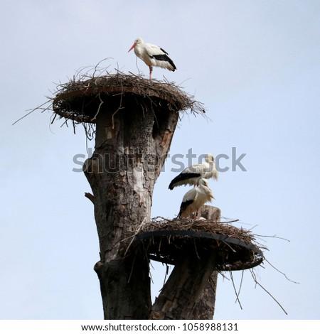 storks on a nest #1058988131