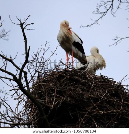 storks on a nest #1058988134