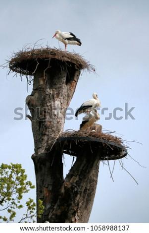 storks on a nest #1058988137