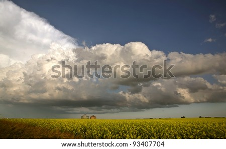 Storm clouds approaching Saskatchewan canola crop