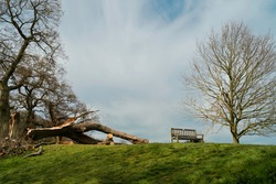 Storm damage to established trees and fallen branches on Westwood public parkland in spring in Beverley, Yorkshire, UK.
