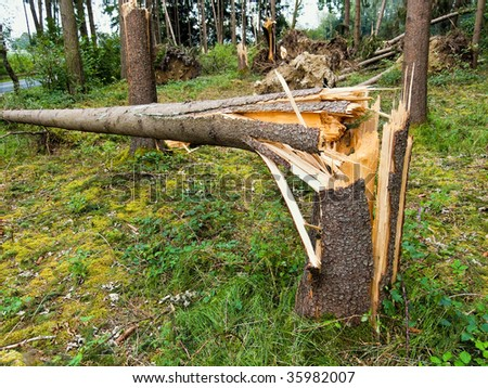 stock-photo-storm-damage-toppled-trees-in-the-forest-after-a-storm-35982007.jpg (450×358)