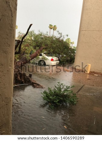 Storm damage uprooted trees and caused flooding. #1406590289