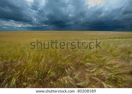 Storm dark clouds over field