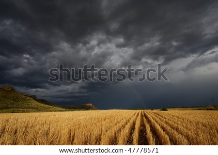 Storm over the wheat fields