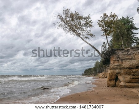 Storming sea with a thundercloud above, a lone birch tree on a the edge of a cliff, beautiful rugged coastline with waves crashing against the cliffs, Veczemju cliffs, Latvia #1481734007