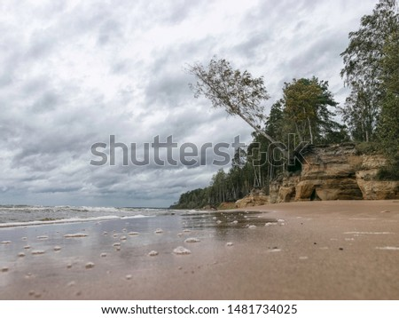 Storming sea with a thundercloud above, a lone birch tree on a the edge of a cliff, beautiful rugged coastline with waves crashing against the cliffs, Veczemju cliffs, Latvia #1481734025