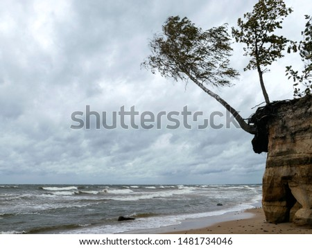 Storming sea with a thundercloud above, a lone birch tree on a the edge of a cliff, beautiful rugged coastline with waves crashing against the cliffs, Veczemju cliffs, Latvia #1481734046