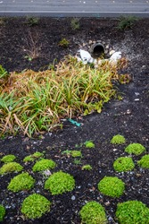 Stormwater management, outlet pipe for excess rainwater, sandbags, and garden plantings