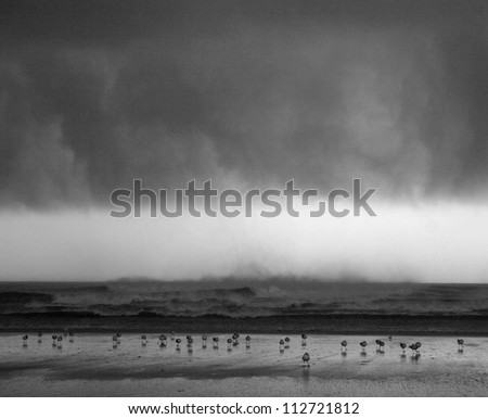 stormy beach with birds
