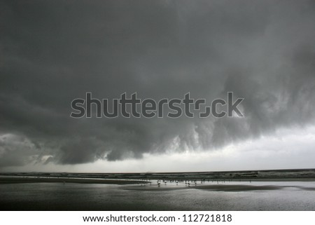 stormy beach with birds