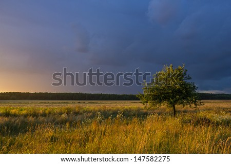 Stormy landscape with heavy clouds and fruit tree lit by the rays of the setting sun
