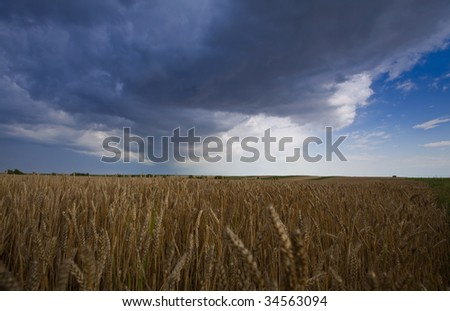 Stormy sky over field of barley in summer