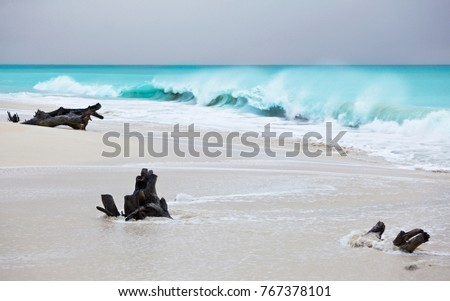 Stormy weather at Ffryes Beach in Antigua with driftwood in the sand. Focus on the driftwood.