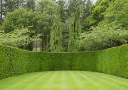 Straight Lines on a Lawn Surrounded by a Yew Hedge with Fir Trees in the Background at Rosemoor in Rural Devon, England, UK
