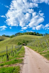 Straight path in green verdant vineyard landscape on a sunny summer day, blue sky and gorgeous cloudscape, vertical view