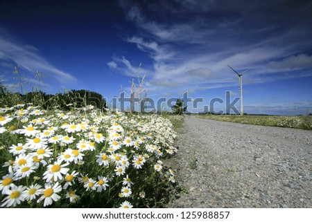 Straight road and white flowers