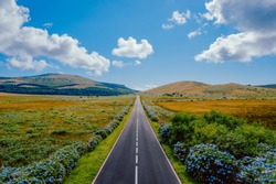 Straight road in early summer on the central plateau of Flores island, Azores