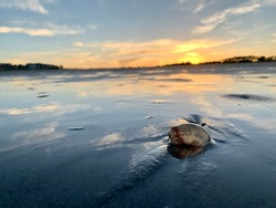 Stranded Jellyfish washed up on the sand as the sun sets in the background on Hilton Head Island's Burke Beach.