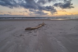 stranded piece of wood is lying in the sand of the beach in Vejers Strand (Denmark)  under scenic vivid sunset sky with clouds