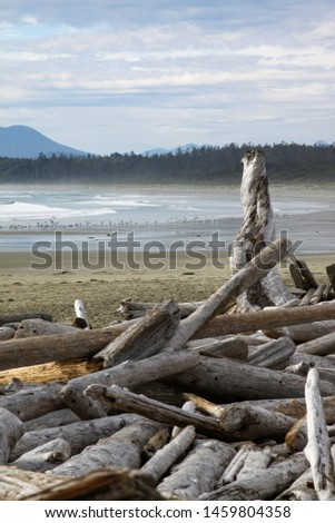 Stranded tree trunks are lonely and lonely on the beach