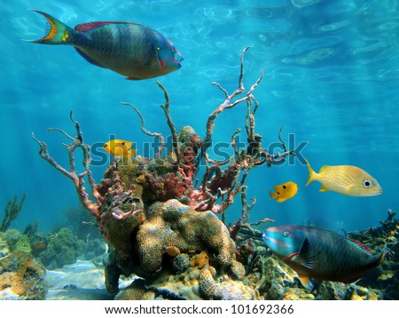 Strange forms of underwater marine life with colorful fish and the water surface in background