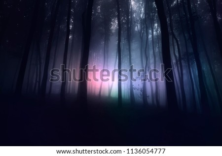 strange light in paranormal forest landscape at night Stock photo ©