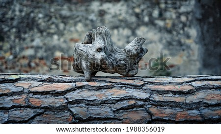 Strange piece of knotty wood on a log. Minimal still life. Natural art and wood decorations. Ancestral symbols and Wiccan rituals. Large piece of root and pine bark background. Stock photo ©