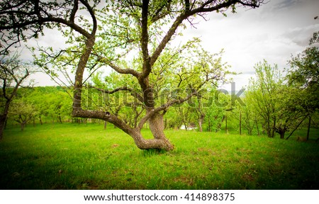 strange tree - Shutterstock ID 414898375